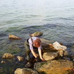 Ручной сбор проб мидии вдоль береговой линии. Фото пресс-службы АзНИИРХ