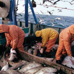 В суд Южно-Курильска направлено уголовное дело в отношении японского капитана