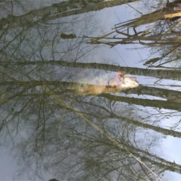 Инспекция обнаружила в воде мертвую рыбу. Фото управления Россельхознадзора по Москве, Московской и Тульской областям