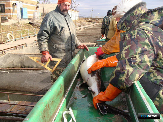 Специалисты определяют размер, массу и другие характеристики рыбы