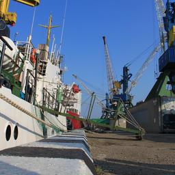Минсельхоз утвердит стратегию развития морских рыбных терминалов