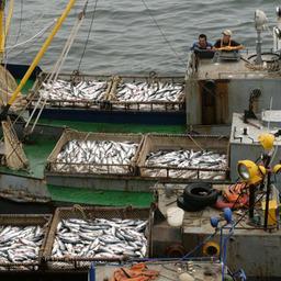 Рыбаки подготовят обращение к президенту