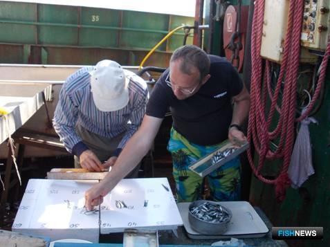 Сотрудники Азовского НИИ рыбного хозяйства и крымского ЮгНИРО провели учетно-траловую и ихтиопланктонную съемки в Черном море. Фото пресс-службы АзНИИРХ