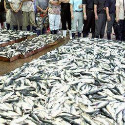 «Год японской скумбрии» принес корейским рыбакам невиданные уловы