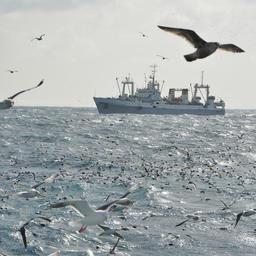 ПАО «Океанрыбфлот» выдвинуло для участия во Всероссийском съезде работников рыбного хозяйства 12 делегатов. Фото пресс-службы компании
