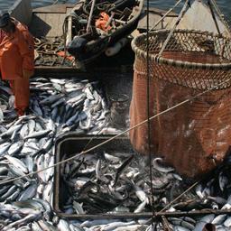 Добыча лосося в Сахалинской области