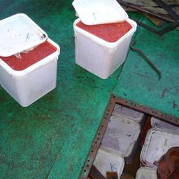 Более 1,5 тонн икры задержано в Магаданском рыбном порту