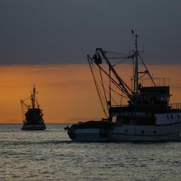 Комитет Госдумы поддержал поправки по «прибрежке»