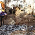 Как увеличить вылов минтая и сельди на Дальнем Востоке