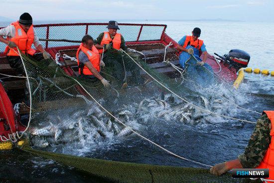 Росрыболовство решило ускорить работу на лососевой путине