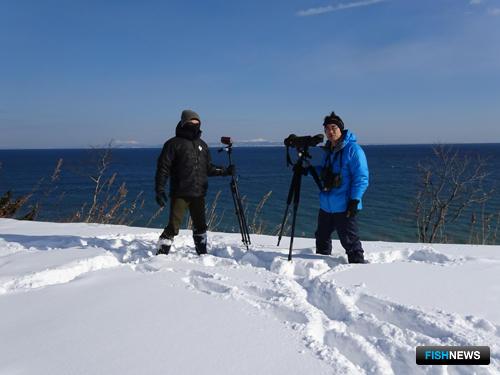 Японские специалисты, участники совместного учета, на восточном побережье полуострова Сиретоко (остров Хоккайдо). Фото пресс-службы заповедника «Курильский»