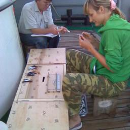 Взятие проб и обработка добытой рыбы. Фото пресс-службы АзНИИРХ