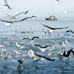 Сахалинские рыбаки выступают за доработку законопроекта