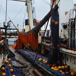 Суда «Океанрыбфлота» добыли уже почти 16 тыс. тонн кальмара на Северных Курилах. Фото пресс-службы компании