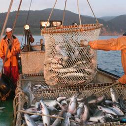 В октябре Сахалин обобщит первый опыт рыбных торгов
