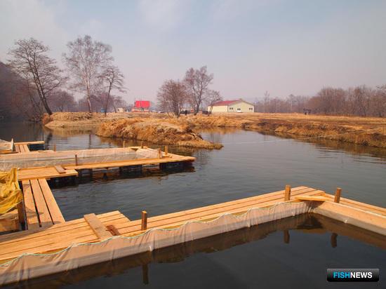 Лососевый рыбоводный завод на реке Вербная в Приморье