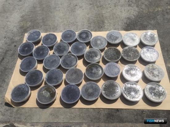 В Хабаровске полицейские изъяли партию икры осетровых на сумму около 450 тыс. рублей. Фото пресс-службы краевого УМВД России
