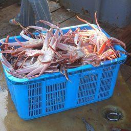 По сообщению Дальневосточной оперативной таможни, одна из владивостокских компаний продавала в Южную Корею морепродукты по заниженной таможенной стоимости. Фото пресс-службы ведомства